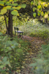 Autumn scene with a bench