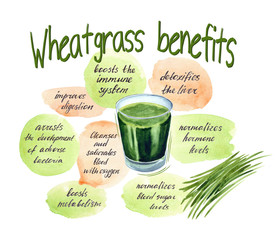 vitgrass or wheatgrass, wheat sprouts juice and info about health benefits,  watercolor hand written infographic illustration of healthcare facts