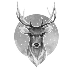 Norble deer. Black and white watercolor illustration