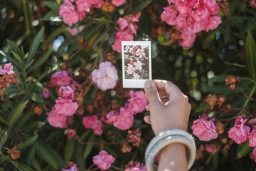 Woman's hand holding photograph against flowers in park