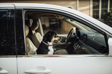 Dog sitting in passenger's seat in front of car