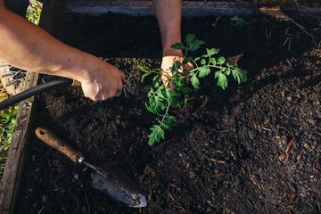 Cropped hands of man watering sapling in garden