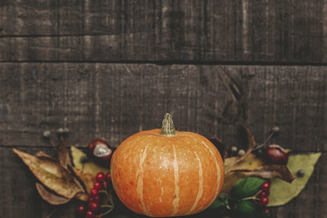 beautiful pumpkin with leaves and berries on rustic wooden background, top view. space for text. thanksgiving or halloween concept greeting card. fall image flat lay. cozy autumn mood
