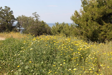 Spring Flowers in Greece, year 2017