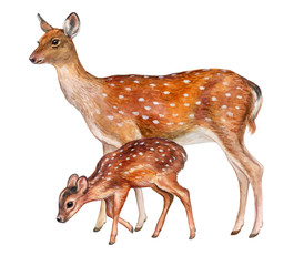 Deer female with baby isolated on white background. Fawn. Motherhood. Wotercolor. Illustration.
