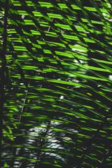 Nature texture