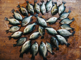 Pile of bluegill and crappie fish on table.
