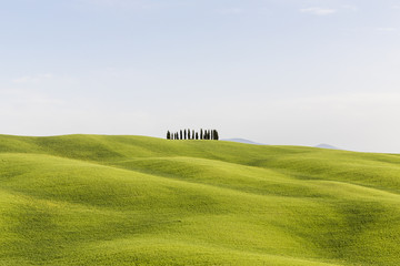 View of cypress trees on hills