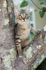 Tabby kitten stuck in a tree
