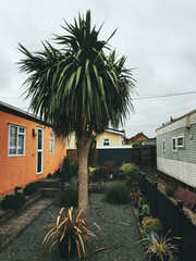 Palm Tree in Small Garden Between Caravan Homes