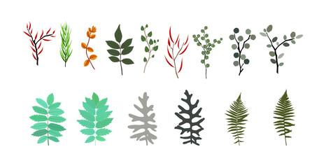 Tropical elements: Agonis, Eucalyptus, Annona, Balata, Zamiokulk