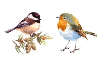Robin and Chickadee Two Birds Watercolor Hand Painted Illustration Set isolated on white background
