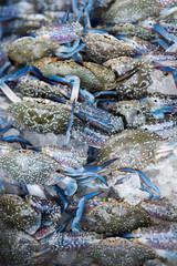 Fresh flower crabs