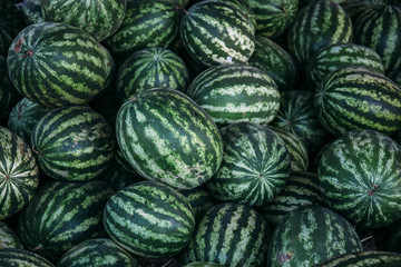 Many big sweet green watermelons