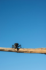 Beetle on a branch