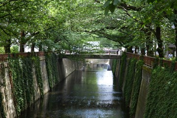Meguro Canal