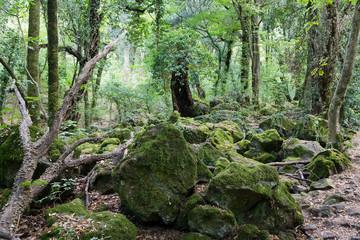 bosco del sasseto8