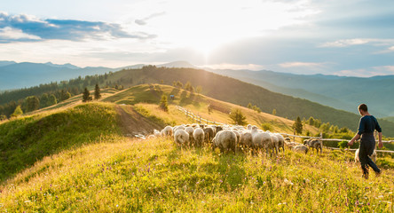 Mountain range at sunset. A herd of sheep in the mountains. Beautiful mountain landscape view. Shepherds' Home in the Mountains