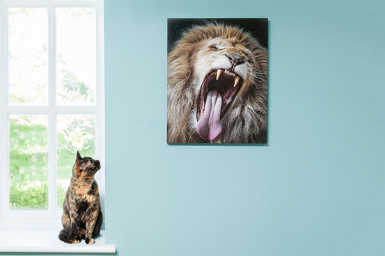 Domestic cat looks in awe at a photo of a lion