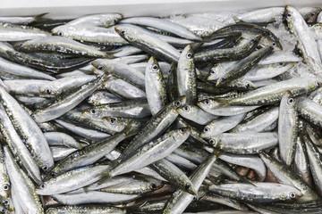 Fresh sardines on a fish market