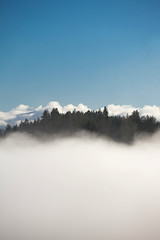 Treetops being swallowed up by the fog