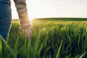 Young woman with jeans touching straws in the green fields and sunset moment