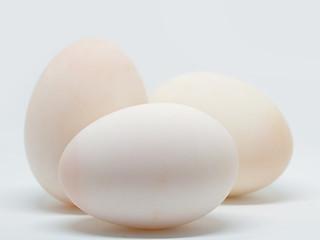 Closeup Duck eggs.