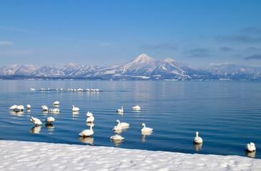 白鳥と磐梯山(猪苗代湖・青松浜)