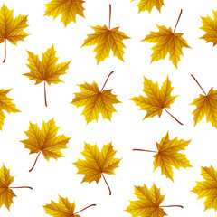 Golden maple leaves isolated on white background
