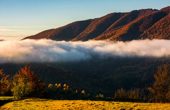 cloud rising above the forest in mountains, beautiful autumnal scenery at sunrise