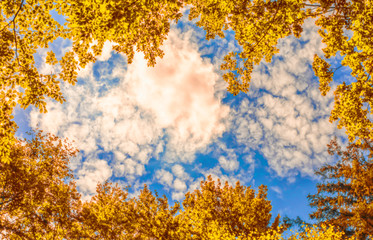 The canopy of autumn trees framing a clear blue sky