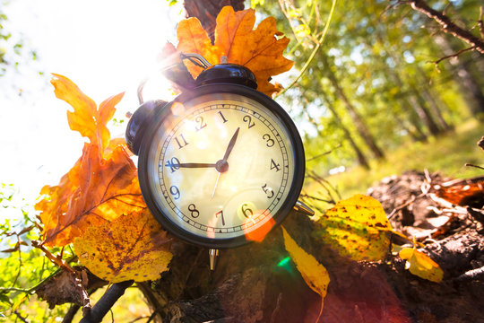 Old alarm clock and sun light through the leaves, autumn time concept