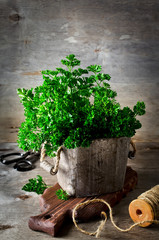 Parsley in wooden box