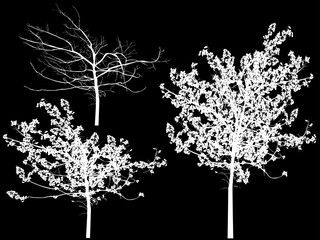three small trees isolated on black