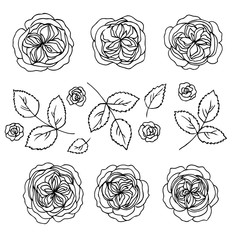 vector contour rose flowers and leaves set