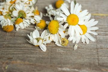 daisy flowers on wooden table. room for text