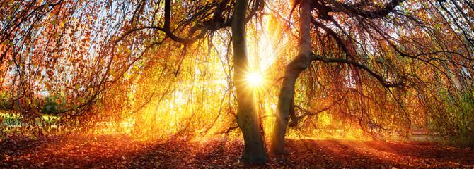 Wall Mural - Goldene Sonnenstrahlen im Herbst