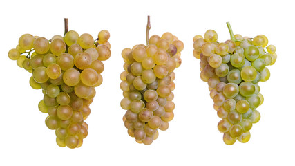 Three yellow grapes isolated on a white background
