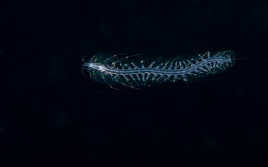Image of a scaled worm at night.