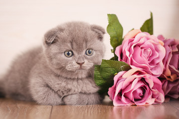 Cat background with bouquet of rose