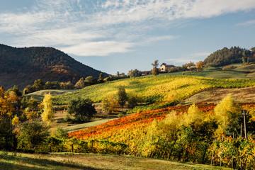 Rural Emilia Romagna, Italy Vineyard