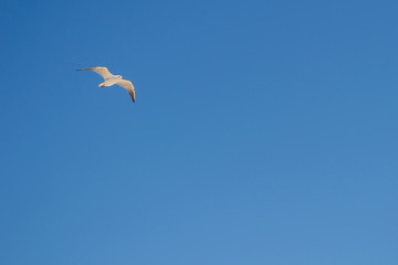 A small seagull hovers in the blue clear sky