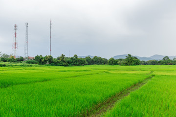 rural rice field with mobile communication signal tower landscape in asian countryside
