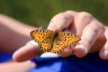 Close up of a butterfly with orange wings sitting on fingers of a human hand; Altai, Russia