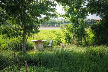 Wooden Table and Chair in The Rice Field