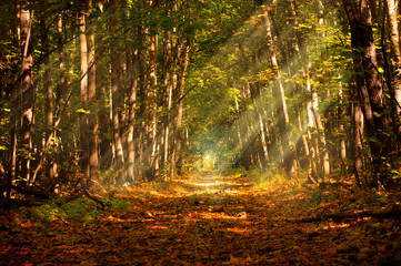 Autumn deep forest in traced ray of daylight