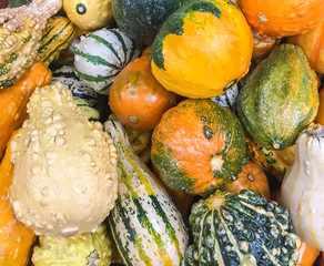 A collection of colorful seasonal Fall Pumpkins, Gourds and Squash