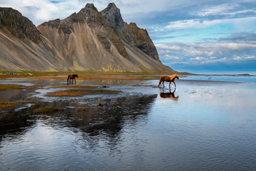 Horse reflection - Stokksnes - Iceland