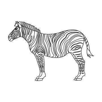 African, desert zebra. Wild cloven-hoofed animal, zebra single icon in outline style vector symbol stock illustration web.