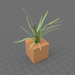 Plant in wood planter